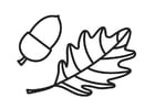Coloring page Acorn and Acorn Leaf