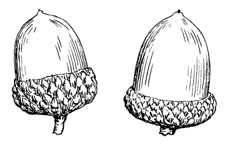 acorn coloring pages decimamas