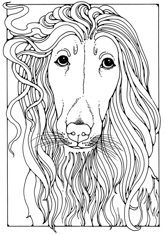 Coloring page Afghan greyhound