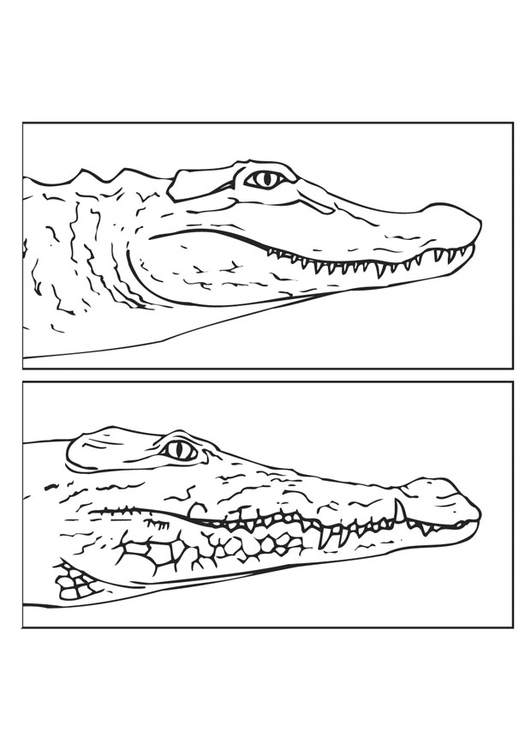 Coloring page alligator and crocodile