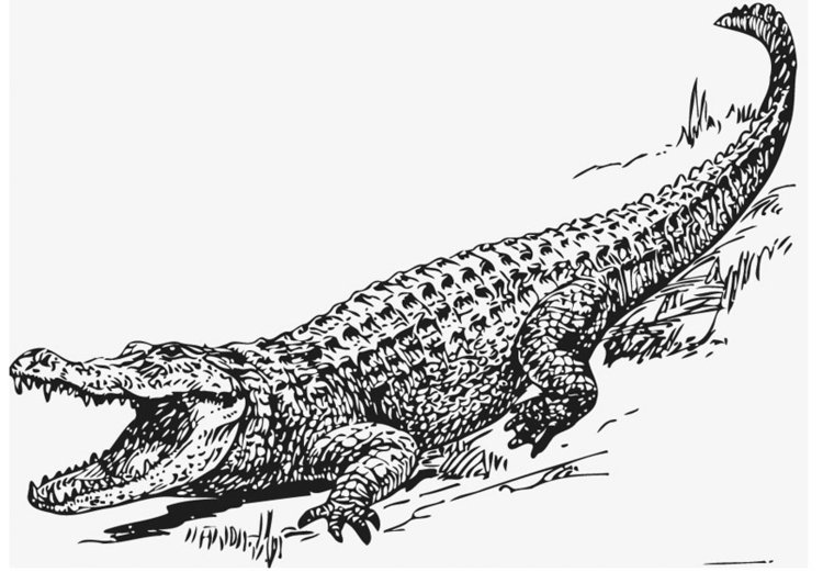 Coloring page Alligator