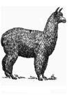 Coloring pages alpaca