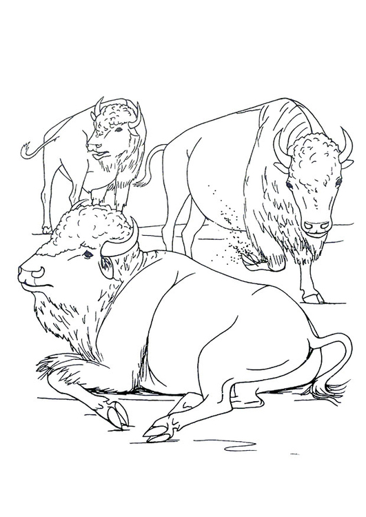 Coloring page American bison