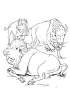 Coloring pages American bison