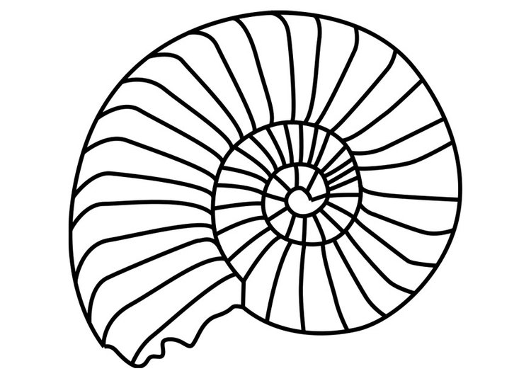Coloring page ammonite mollusc