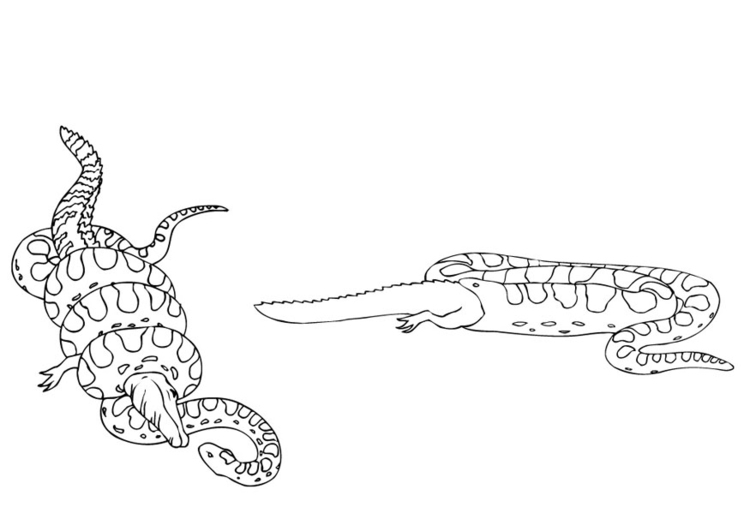 Coloring page anaconda eats lizard
