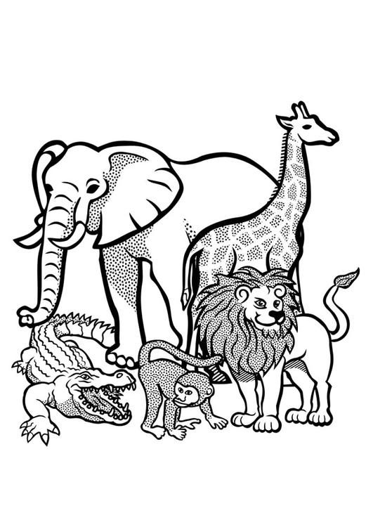 coloring page animals in the wild img 29436. Black Bedroom Furniture Sets. Home Design Ideas