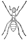 Coloring pages ant