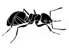 Coloring page ant