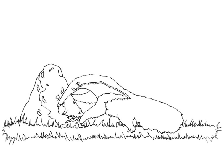 Coloring page anteater foraging