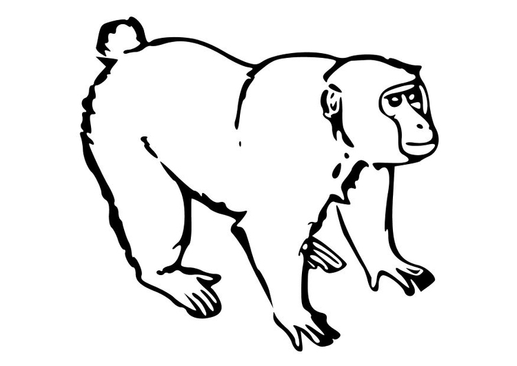 Coloring page ape