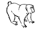Coloring pages Monkey