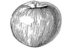 Coloring page Apple