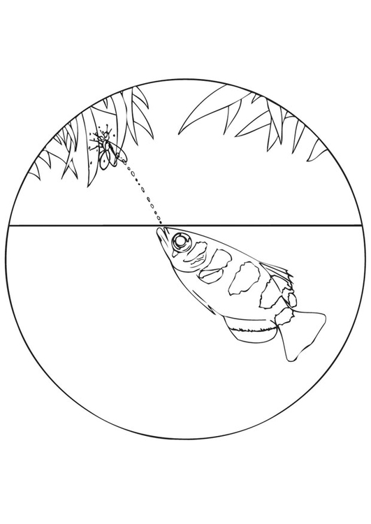 Coloring page archerfish