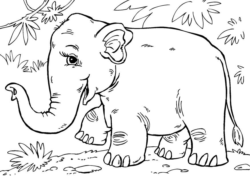 Elephant Face Coloring Page Asian Elephant Coloring Pages