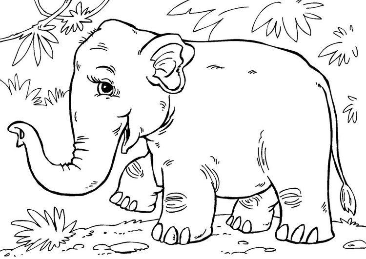 Coloring page Asian elephant