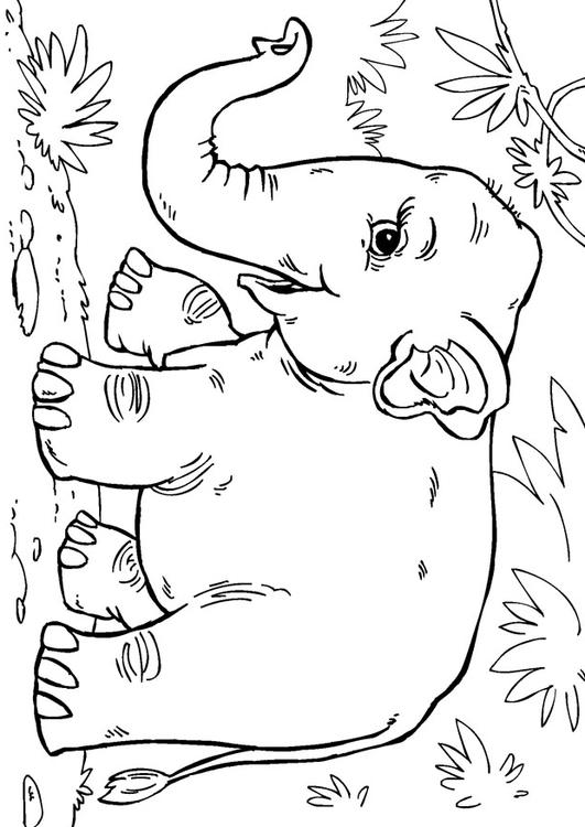 coloring page asian elephant img 27854. Black Bedroom Furniture Sets. Home Design Ideas