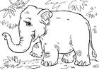 Coloring pages Asian elephant