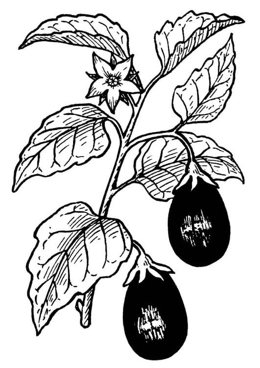 Coloring Page Aubergine Eggplant