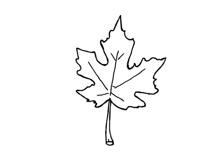 Coloring page autumn leaf
