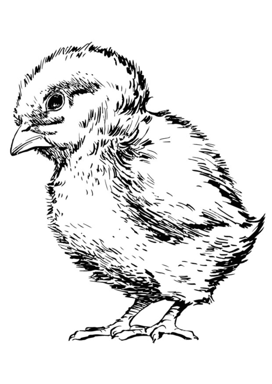 Coloring page baby chicken