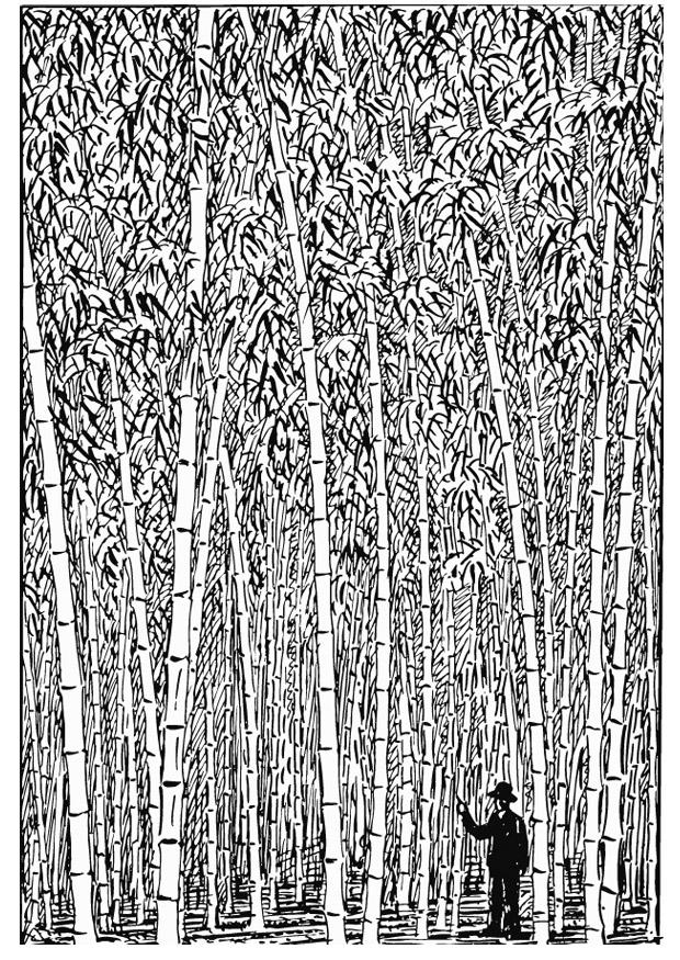 bamboo coloring pages - coloring page bamboo img 13196