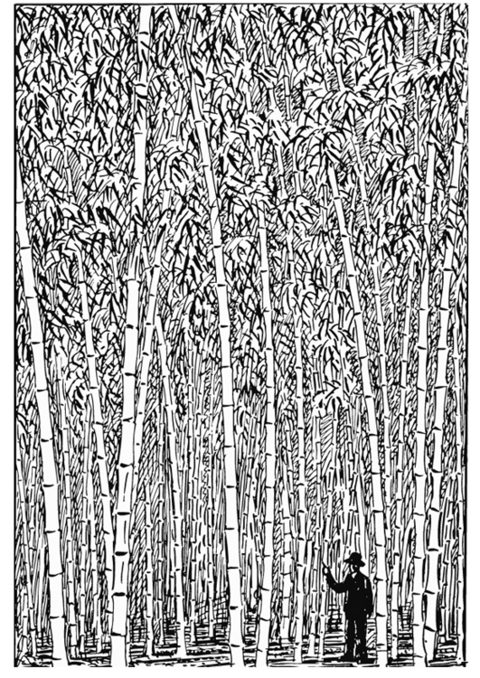 Coloring page Bamboo