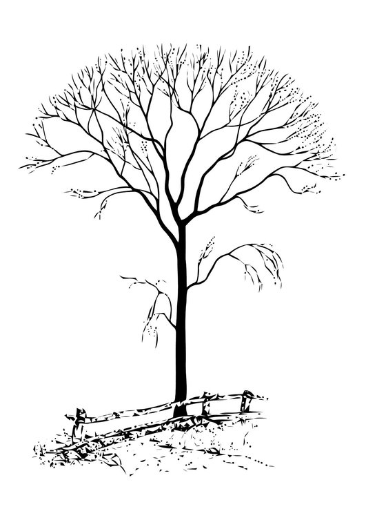 Coloring page bare tree