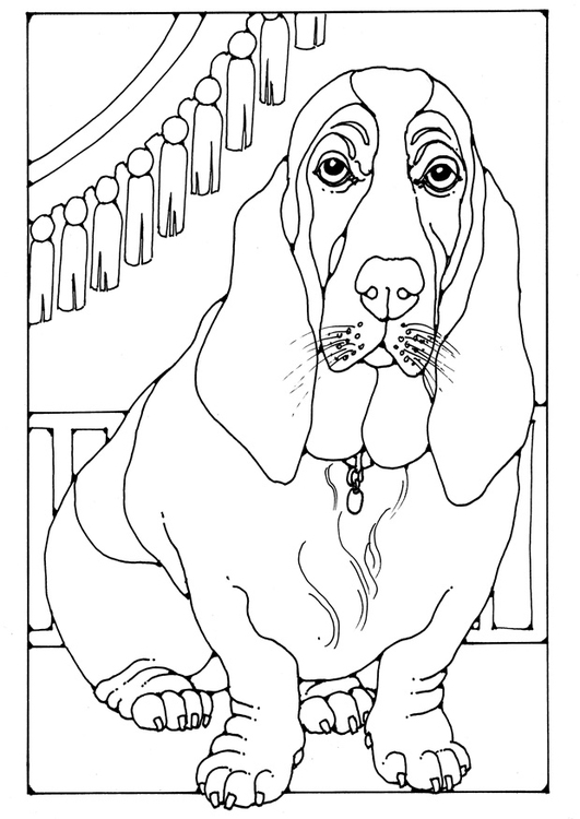 Coloring page basset