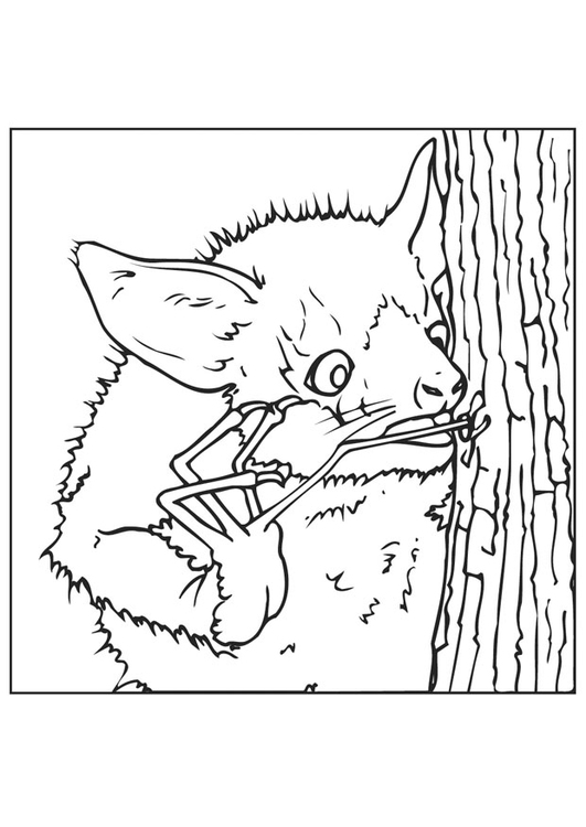 Coloring page bat looks for insects