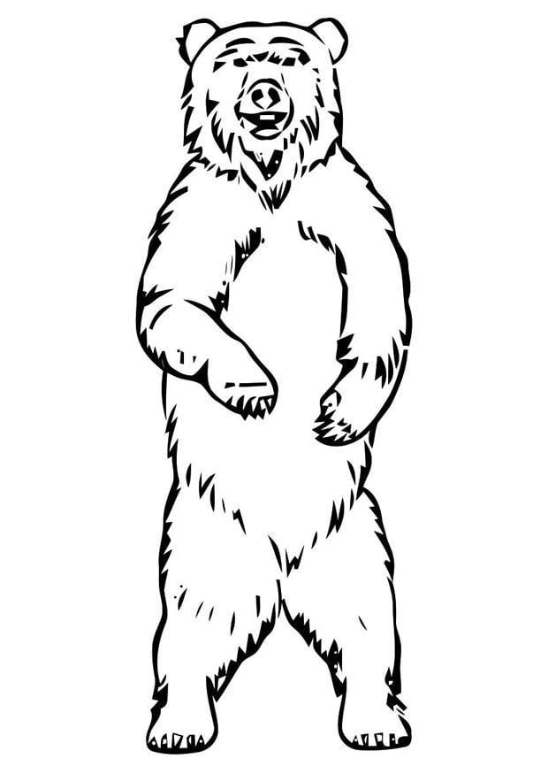 Coloring page bear - img 19400.