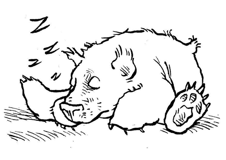 coloring page sleeping bear