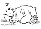 Coloring pages  sleeping bear