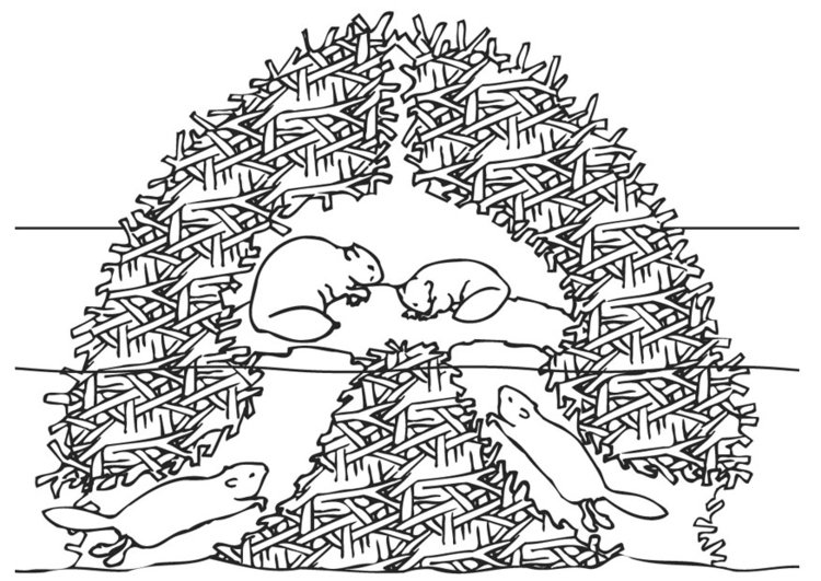 Coloring page beaver nest