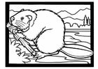 Coloring page beaver with branch