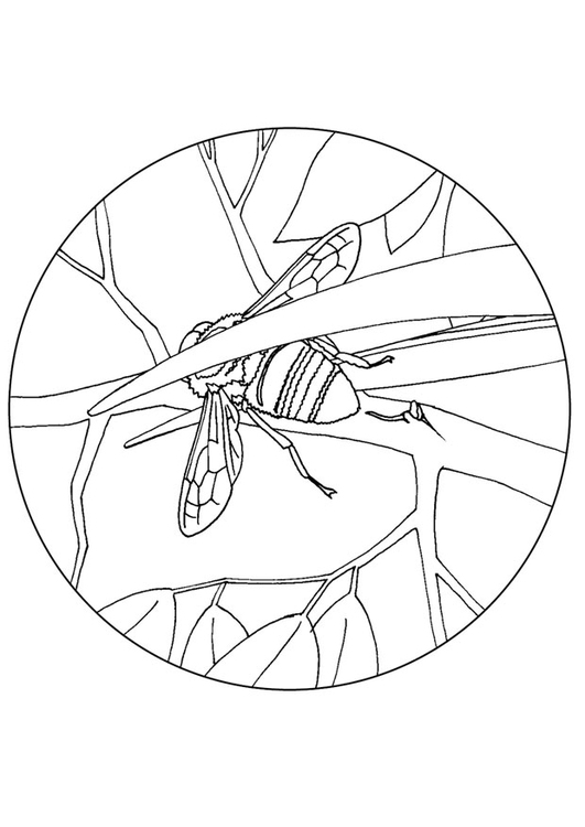 Coloring page bee eater