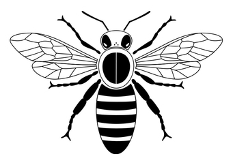 Coloring page bee