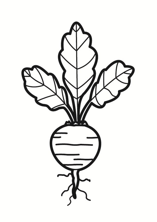 Coloring page beet
