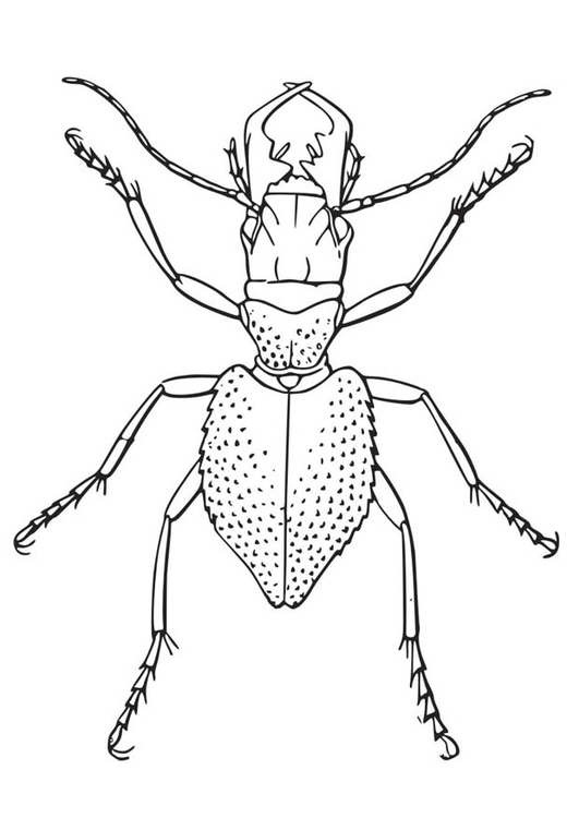 Coloring page Beetle