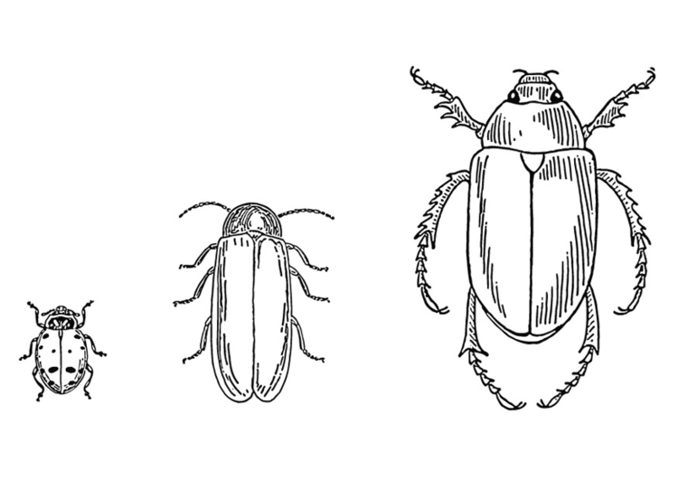 Coloring page Beetles