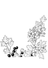 Coloring page berries and blossoms
