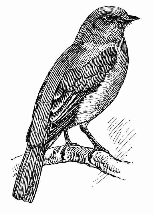 Coloring page bird - bluebird