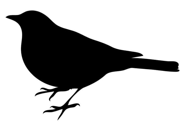 Coloring Page Bird