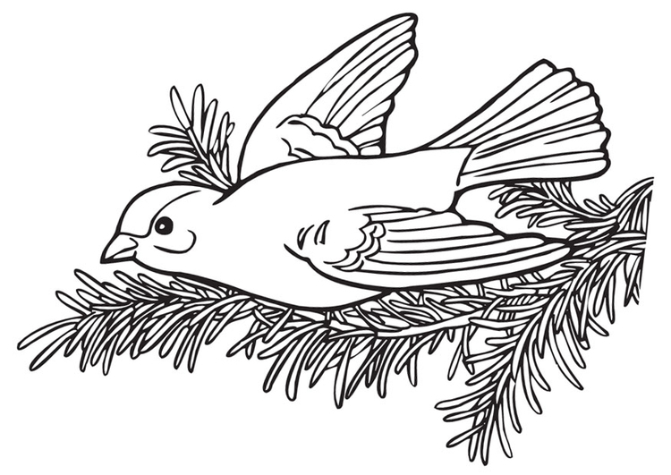 Coloring page bird