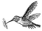 Coloring pages bird - Hummingbird