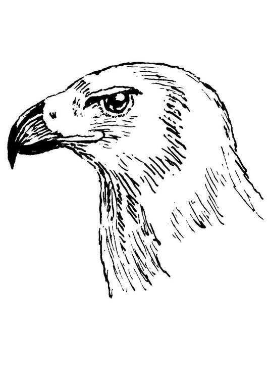 Coloring page bird of prey