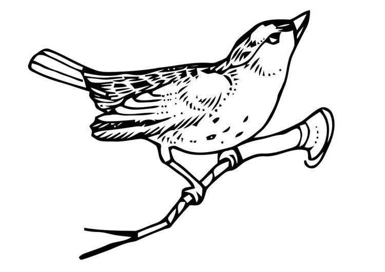 Coloring page bird on branch