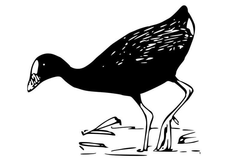 Coloring page bird - purple gallinule