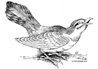 Coloring pages bird