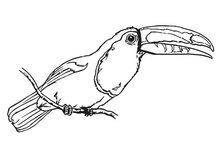 Coloring page bird - toucan